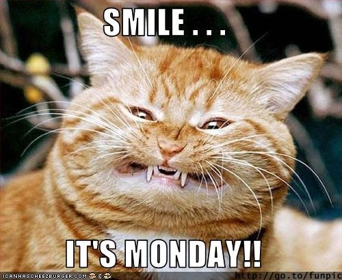 Image result for smile it's monday animals