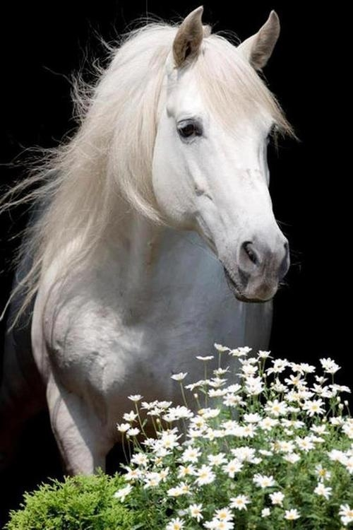 Beautiful White Horse Pictures, Photos, and Images for ...