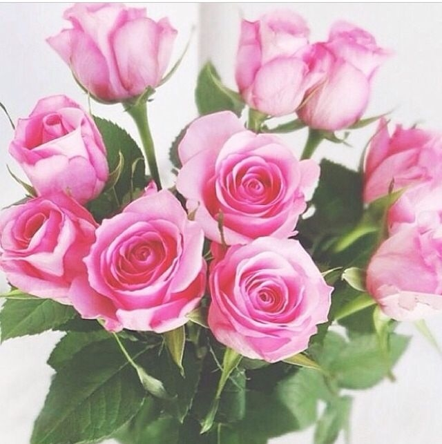 Pretty Pink Roses Pictures Photos And Images For Facebook Tumblr