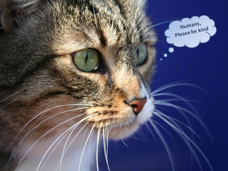 Cat - Humans Please Be Kind Pictures, Photos, and Images for ...