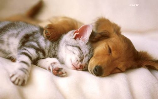 Good Night Cat Dog Pictures Photos And Images For Facebook