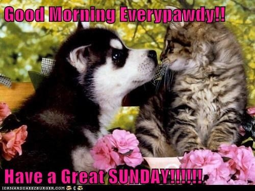 Good Morning Sunday Cute Images : Cute morning quotes for facebook quotesgram
