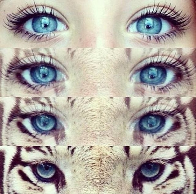 Tiger Eyes Pictures, Photos, and Images for Facebook ...