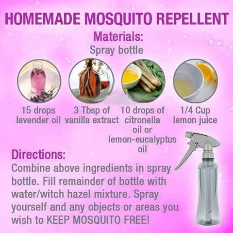 Homemade Mosquito Repellent Pictures Photos And Images For
