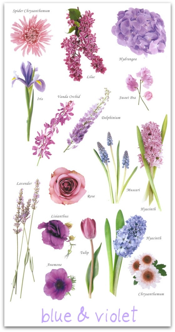 Blue And Violet Flower Guide Pictures Photos And Images For