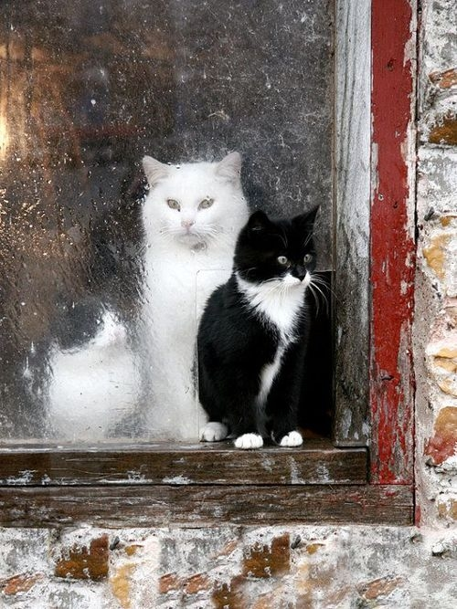 Kittens In Barn Window Pictures Photos And Images For