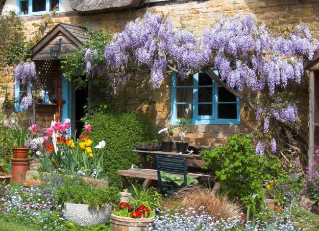 cute cottage garden pictures photos and images for