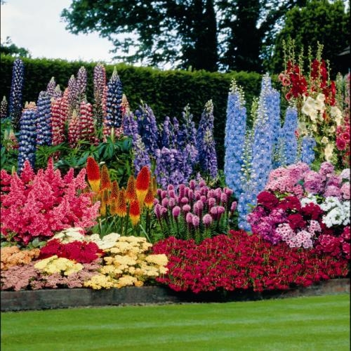Colorful Flowerbed Pictures, Photos, and Images for Facebook ...