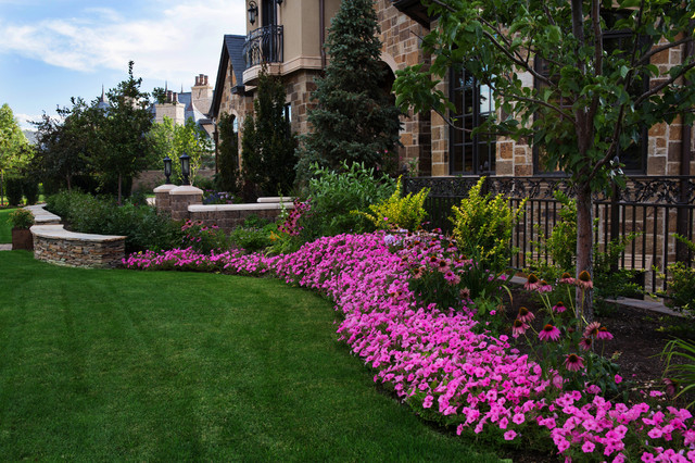 beautiful flowerbed of pink petunias pictures photos and images for facebook tumblr. Black Bedroom Furniture Sets. Home Design Ideas