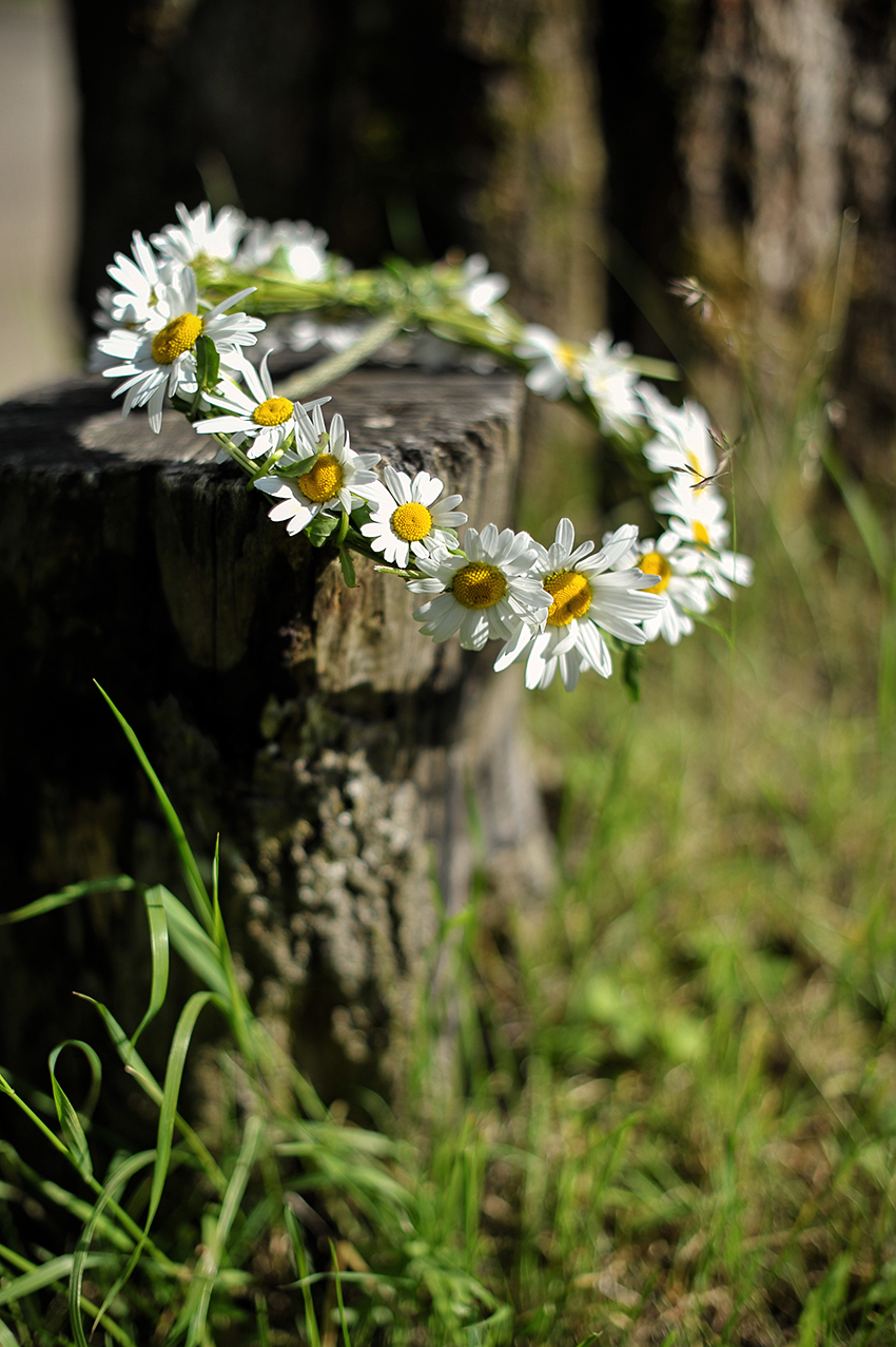 Daisy halo pictures photos and images for facebook Where did daisies originate