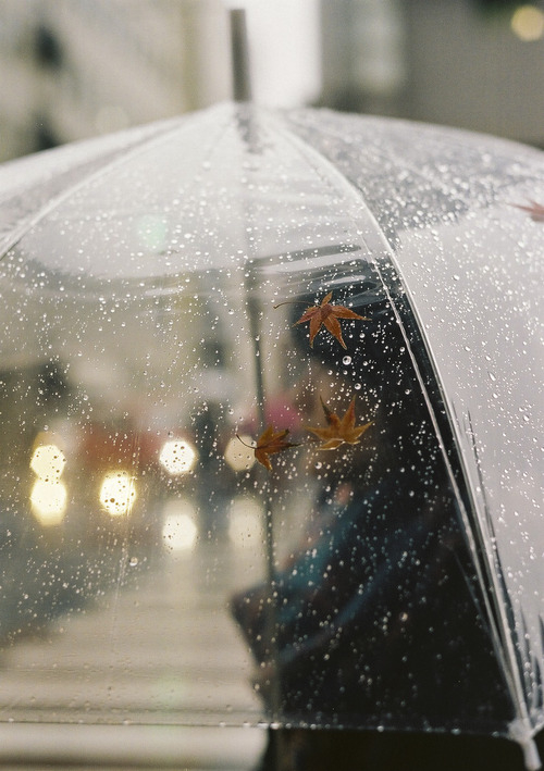 Clear Umbrella Pictures, Photos, and Images for Facebook