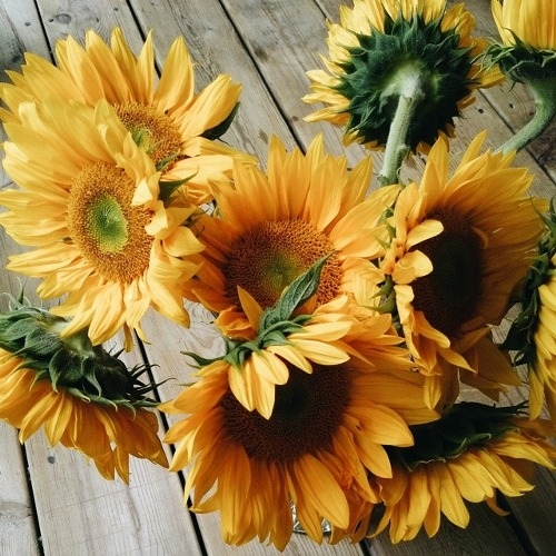 Pictures Images On Pinterest: Sunflowers Pictures, Photos, And Images For Facebook