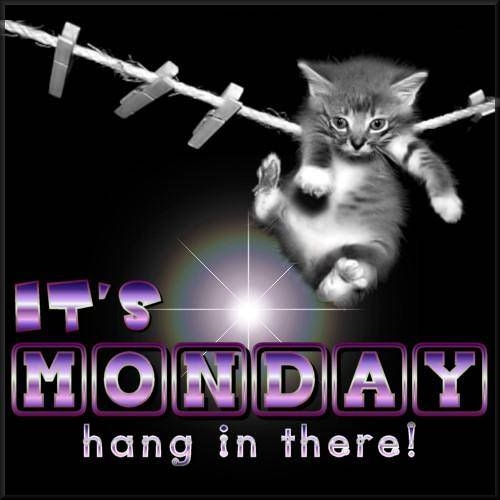 It's Monday Hang In There! Pictures, Photos, and Images ...