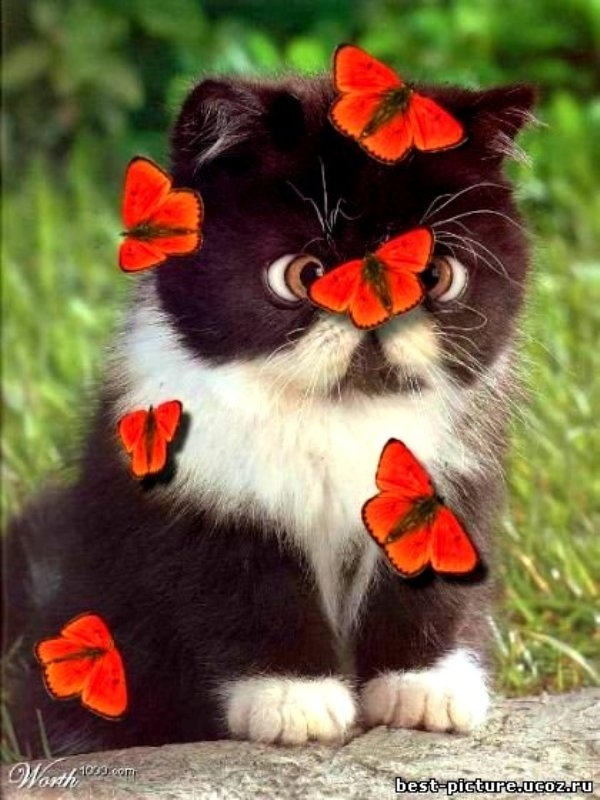 Cat Covered in Red Butterflies