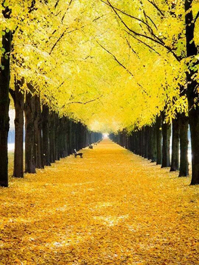 Yellow Fall Leaves Pictures Photos And Images For