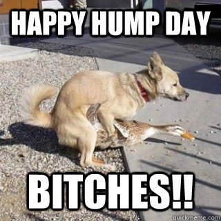 Funny hump day pics and quotes