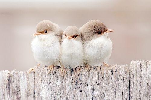 Three Little Birds Pic...