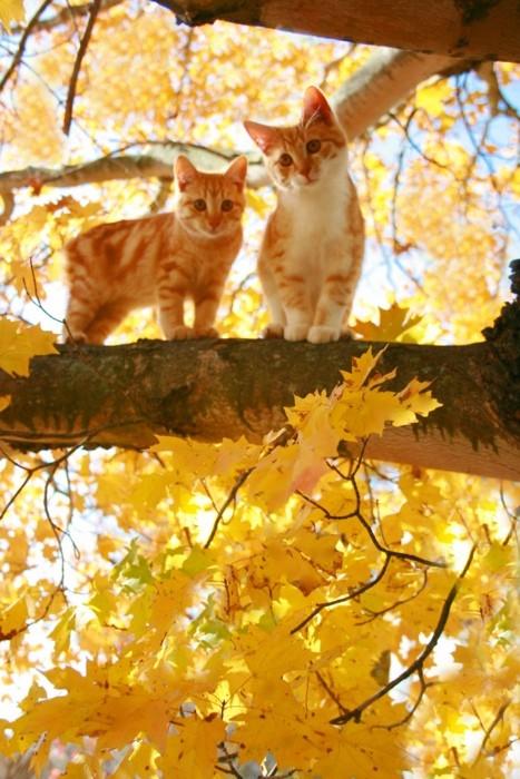 Autumn kitty
