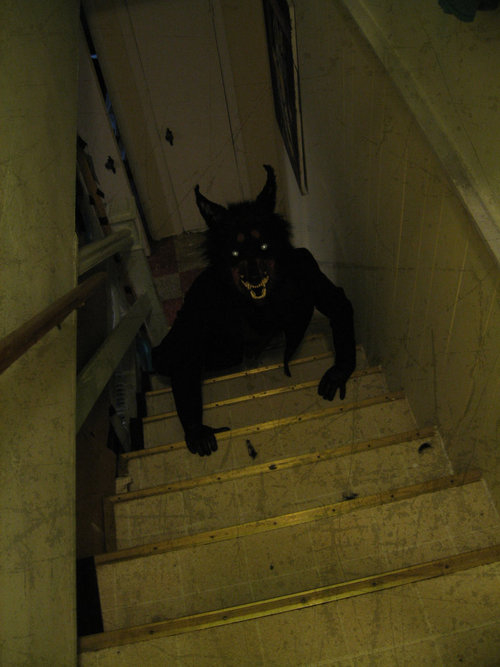 Demon In The Basement Pictures Photos And Images For
