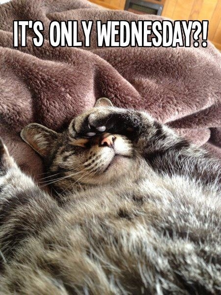 Its Only Wednesday Pictures, Photos, and Images for ...