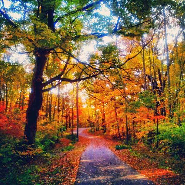 Beautiful Autumn Day Pictures, Photos, And Images For