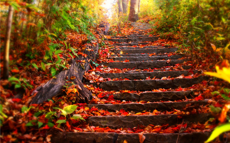Autumn Leaves On Steps Pictures Photos And Images For