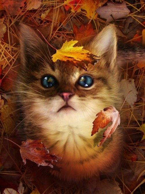 Cute KItty & Fall Leaves