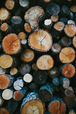 Tree Stumps Pictures Photos And Images For Facebook