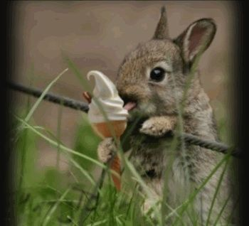 cute bunny having a nice cream pictures photos and images for