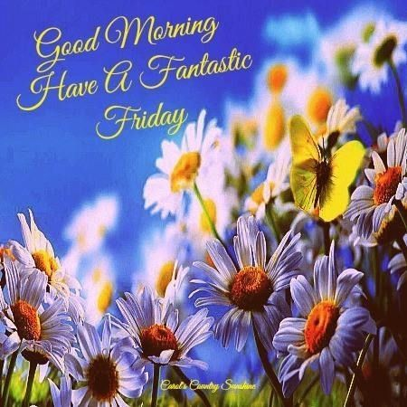 Good Morning Friday Pictures Photos And Images For