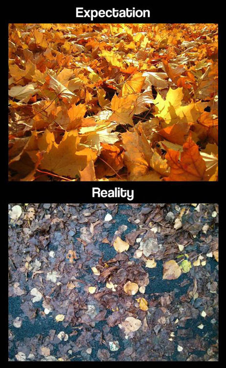Fall Expectations Vs Reality Pictures Photos And Images