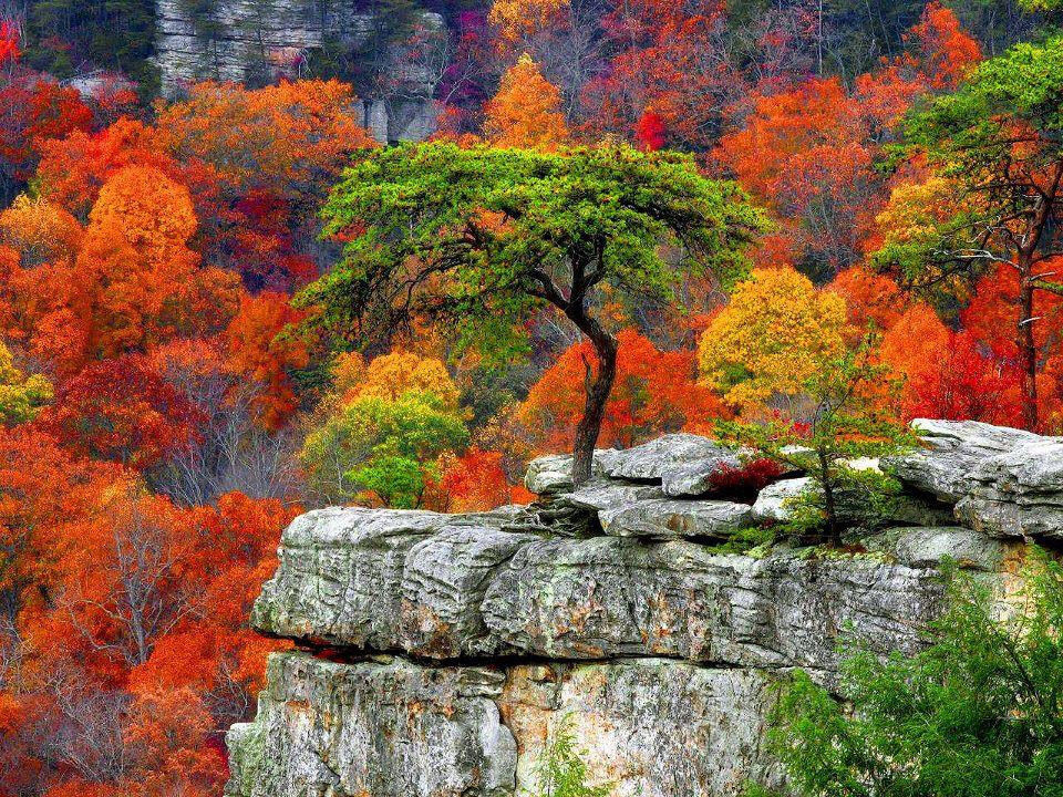 Colorful Autumn Trees Pictures, Photos, and Images for