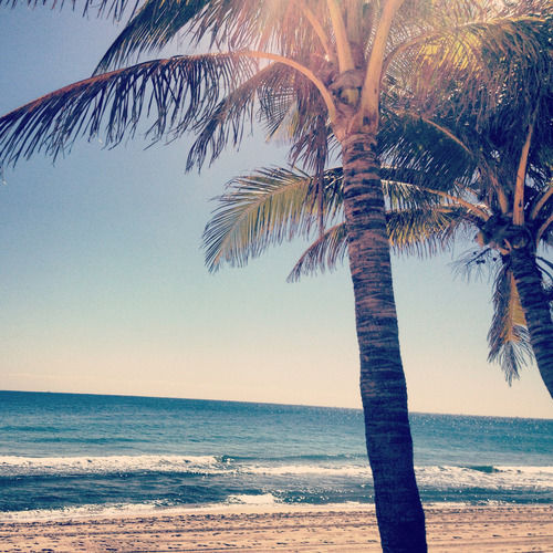 Palm Tree Beach: Palm Tree And Beach Pictures, Photos, And Images For