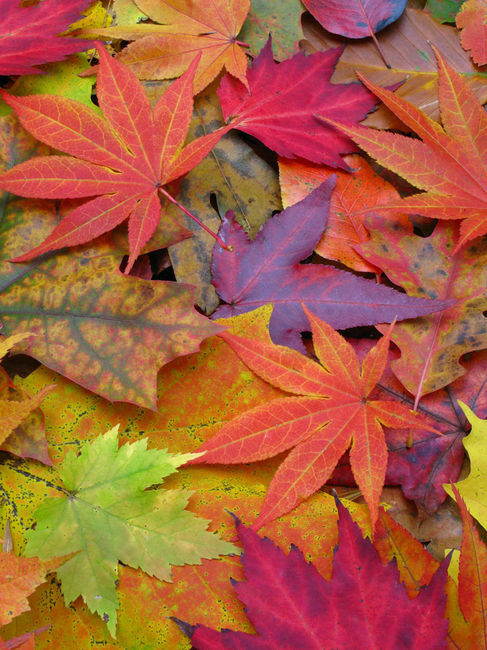 autumn trees colorful leaves -#main