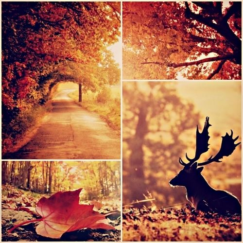 Image result for autumn pinterest