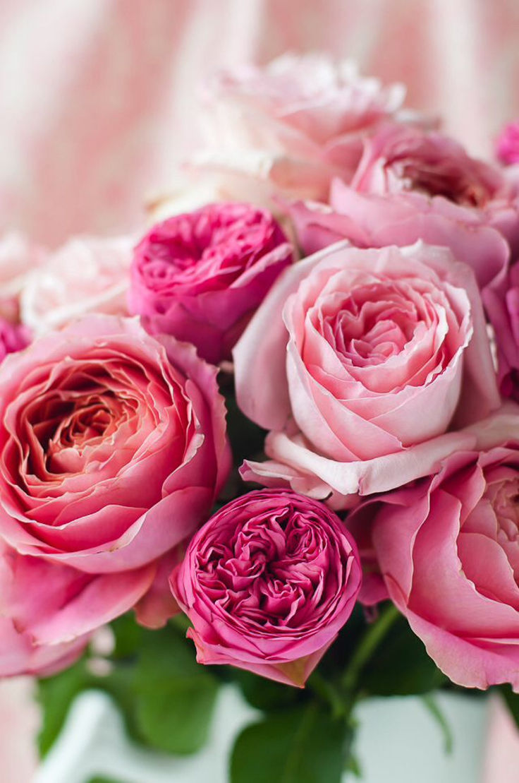 Pink Floral Roses Pictures Photos And Images For Facebook Tumblr