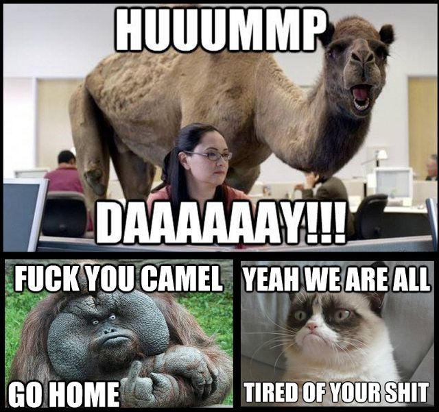 [Image: 130613-Hump-Day-Camel-Meme-War.jpg]