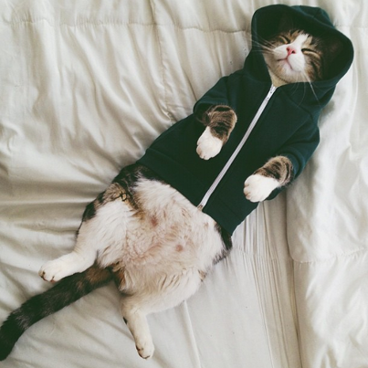 Sleeping Cat In A Hoodie Pictures Photos And Images For Facebook Tumblr Pinterest And Twitter