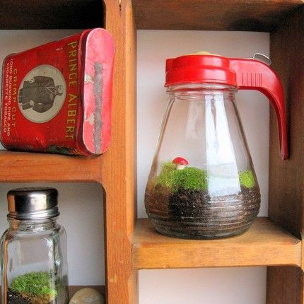 Syrup Jar Terrarium Pictures Photos And Images For Facebook