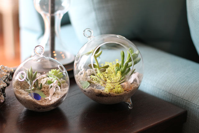 succulent sea terrarium pictures photos and images for