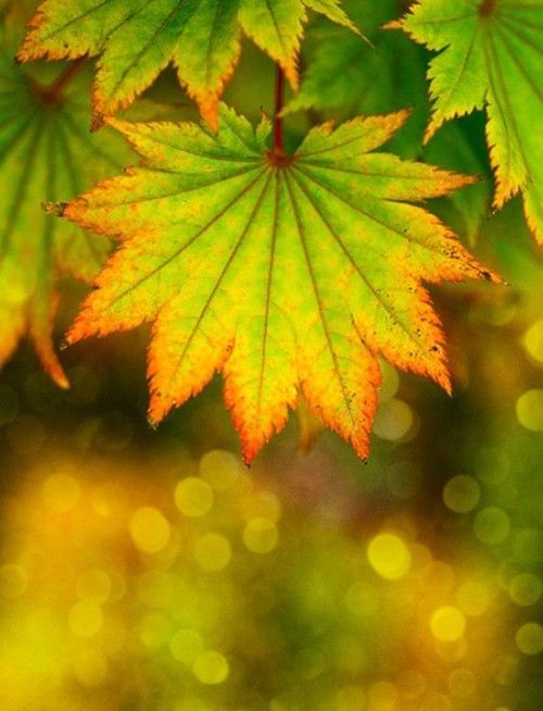 Beautiful autumn leaves pictures photos and images for facebook
