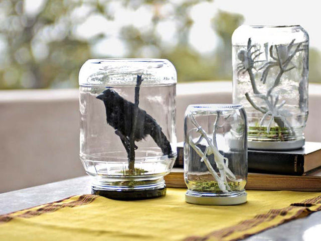Spooky Terrariums Pictures Photos And Images For