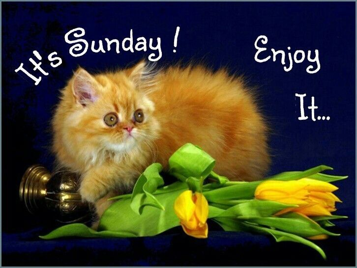 It's Sunday Enjoy It Pictures, Photos, and Images for