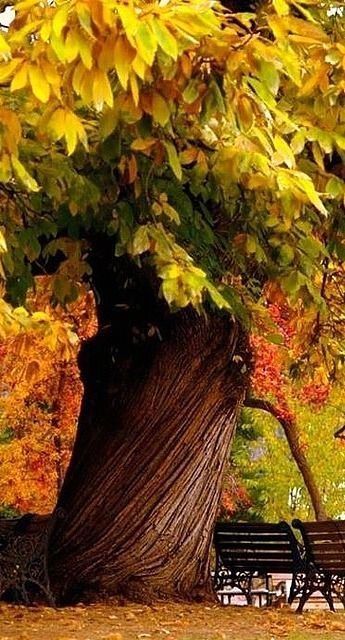 Beautiful Tree With Unusual Trunk Pictures Photos And