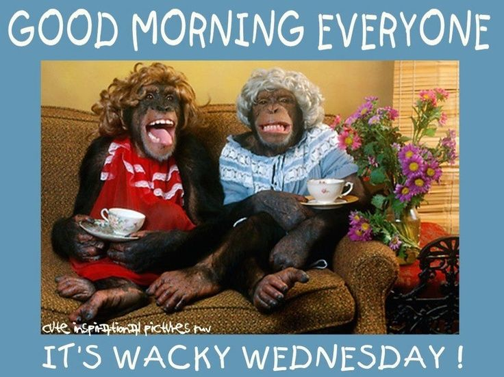 Good Morning Wednesday Images : Good morning wednesday pictures photos and images for