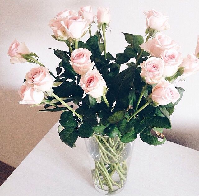 White pink roses pictures photos and images for facebook tumblr white pink roses mightylinksfo