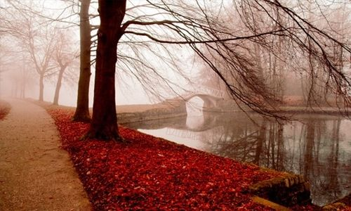 Foggy Fall Day Pictures, Photos, and Images for Facebook