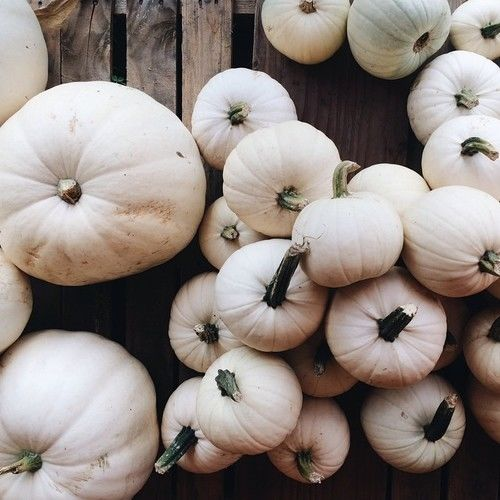 White Pumpkins Pictures Photos And Images For Facebook