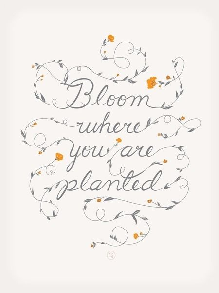 bloom where you are planted pictures  photos  and images for facebook  tumblr  pinterest  and
