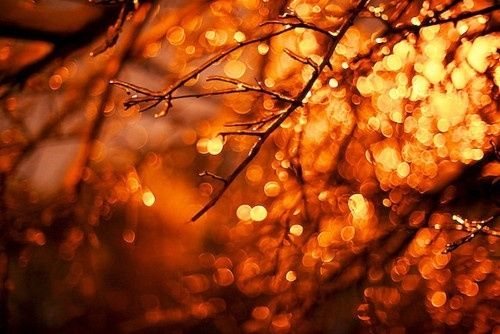 Autumn Bokeh Pictures Photos And Images For Facebook